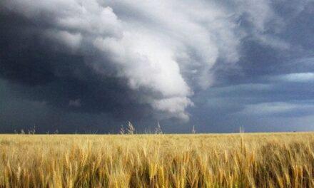 """""""La Grande Madre, il vento e il grano"""" di Mirela Stillitano"""