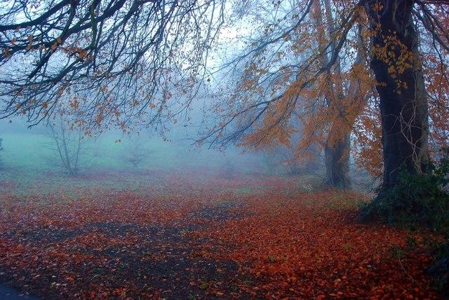 La poesia del giorno: Già mi parla l'autunno di Sandro Penna
