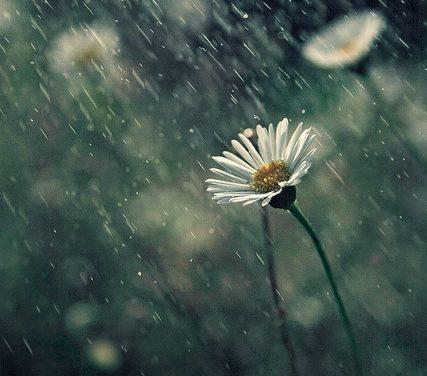 La poesia del giorno: Alla pioggia di Edmondo De Amicis